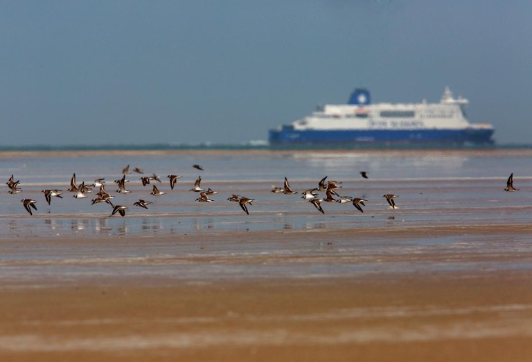 Photo of Ringed Plovers, France