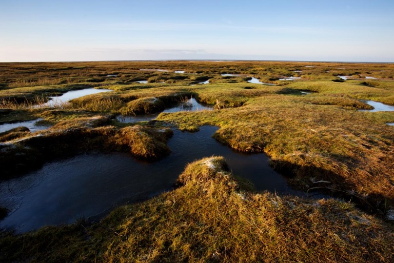 Photo of frozen saltmarsh, Westerhever, Nordfriesland, Germany
