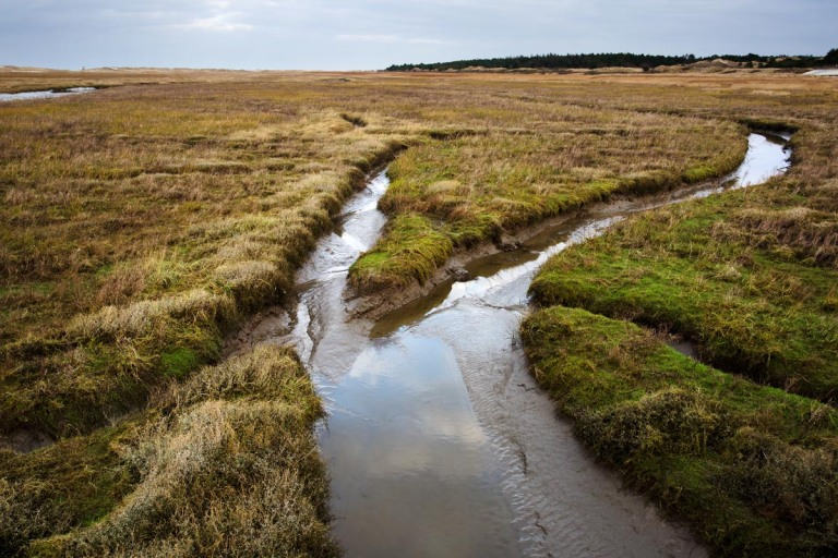 Photo of a Saltmarsh, Sankt Peter-Ording, Nordfriesland, Germany