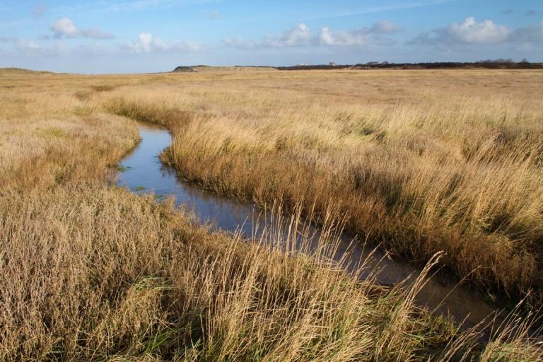 Photo of the Zwin nature reserve, Belgium