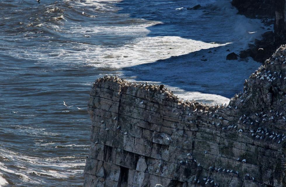 Photo of Bempton Cliffs, Yorkshire, England, United Kingdom