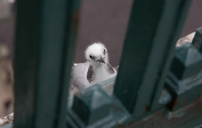 Photo of a Kittiwake, Newcastle upon Tyne, United Kingdom