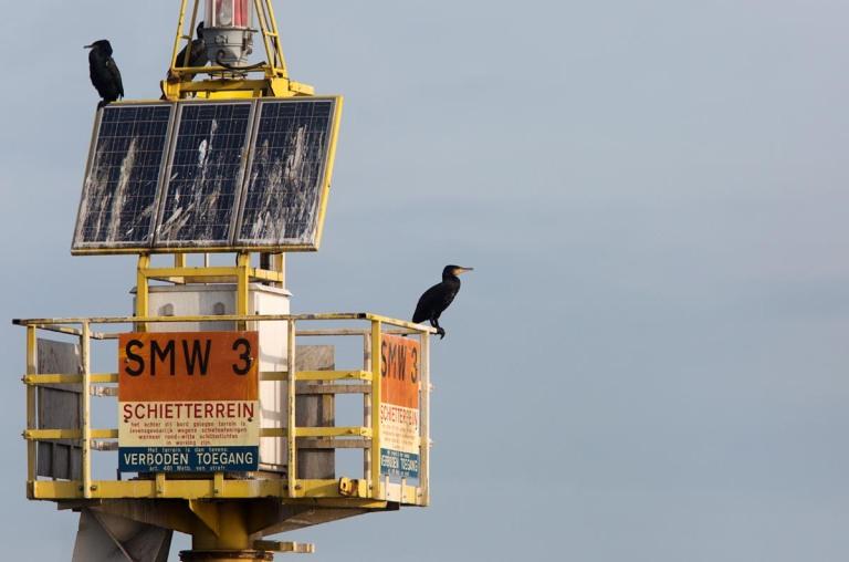 Photo of Cormorants, Wadden Sea, the Netherlands