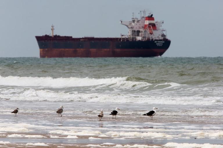 Photo of Great Black-backed Gulls on Plage du Braek outside the port of Dunkirk, France.
