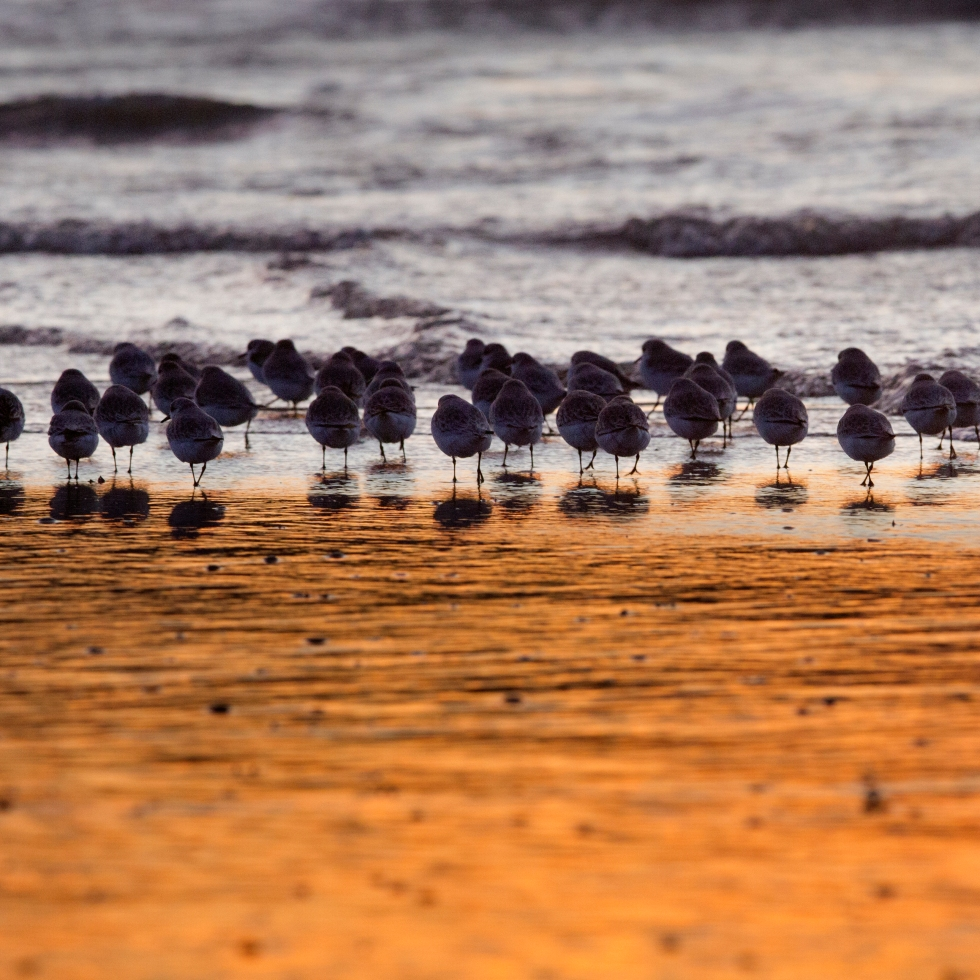 coverphoto Turn the tide, birds around the North Sea