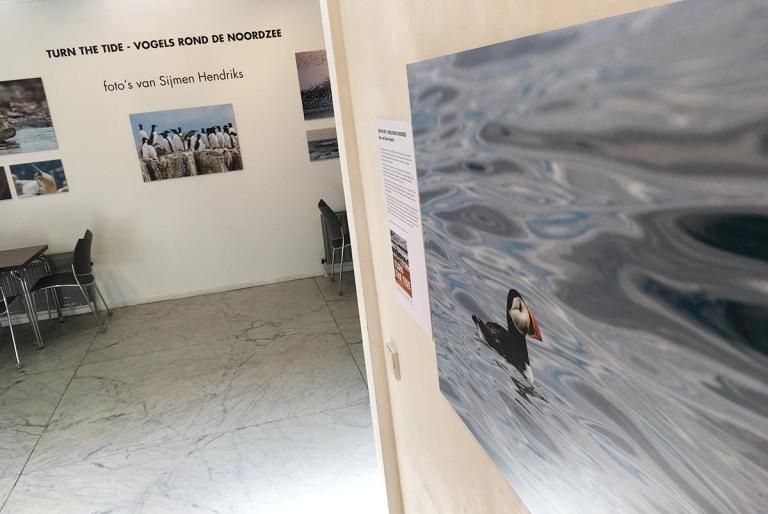Foto expositie 'Turn the tide, vogels rond de Noordzee'